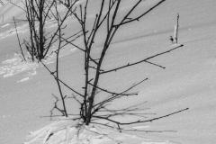 Etrange phénomène: le givre forme un relief au pied de l'arbuste