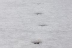 Le passage du renard...