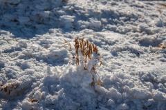 La nature se bat dans le froid