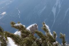 Entre flou et pins