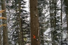 L'arbre est impressionnant...
