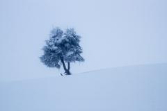 Un arbre surgit du brouillard
