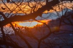 Coucher de soleil à travers les branchages