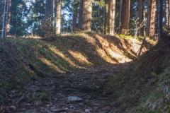 Un chemin creux joue avec la luminosité